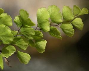 Вянут листья у помидор  что делать  Сайт о саде даче и
