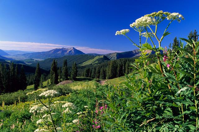 тибетские травы для очищения организма